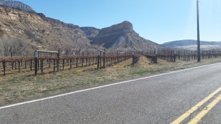 lovelivingincolorado Palisade wineries